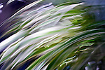 Plant blades. Abstract image taken with intentional camera shake.