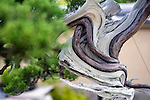 "Photo shows a close-up of the bark of a Japanese juniper, named ""Jyun"", on display at the Saitama Omiya Bonsai Museum of Art in Saitama, Japan on 15 Aug. 2011..Photographer: Robert Gilhooly"