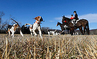 The hunting dogs get excited before the start of the annual fox hunt after the Blessing of Hounds ceremony  Thanksgiving day at the Grace Episcopal Church in Keswick, VA. The service first began in 1929 as a way to preach to sportsman who were not regular churchgoers.  Photo/Andrew Shurtleff