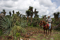 Mezcales Murcielago, Don Alejandro Gamiz's Mezcal in Tuitan. La Ruta del Mezcal, Durango, Mexico