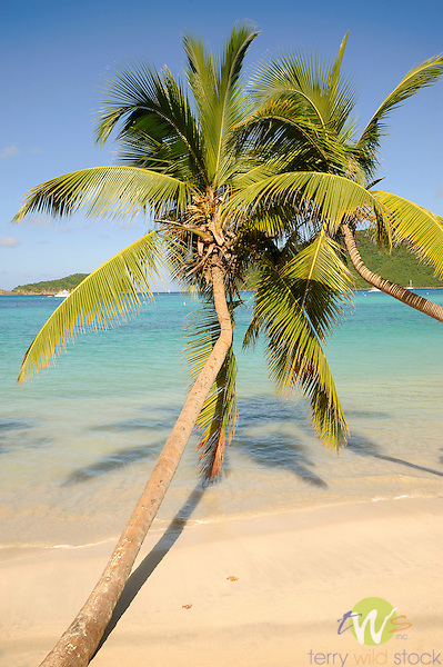 Maho Bay Beach, St. John, USVI, Caribbean.