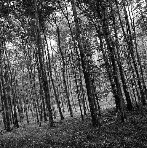 Woodland, Kennick, North Devon, 2011 by Paul Cooklin