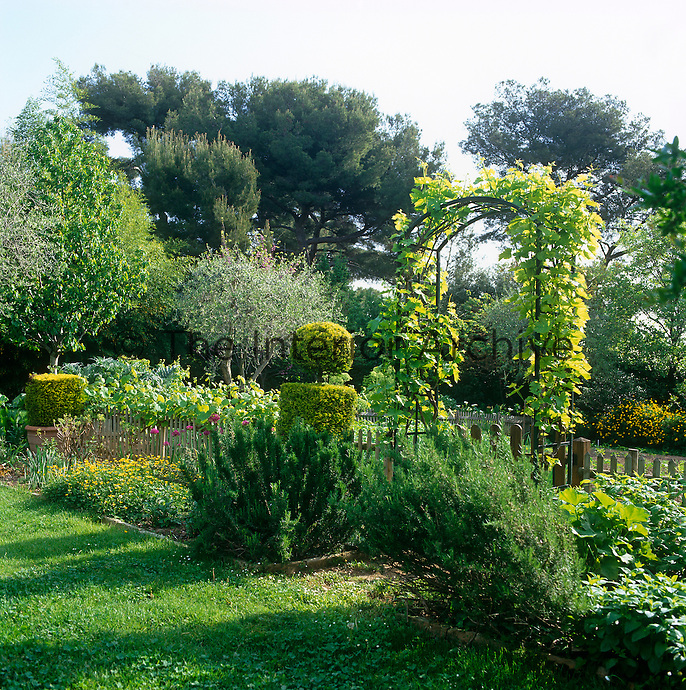 The arched entrance to the vegetable garden is covered with a climbing vine and flanked by two large rosemary plants