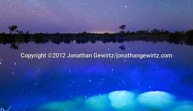 The night sky reflects on the surface of a small lake in Everglades National Park, Florida.