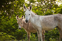 Wild donkeys<br />