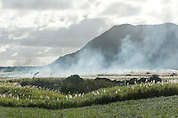 Mauritius. Sugarcane fields in the evening with smoke drifting across the landscape.