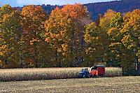 Harvesting Corn near Montgomery VT