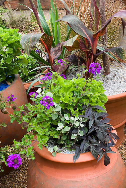 container garden of annual plants plant flower stock photography. Black Bedroom Furniture Sets. Home Design Ideas