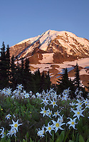 Mt Rainier Pictures and photos of Mt Rainier. From the lowlands surrounding it, to summit of Mt Rainier, these images hopefully capture the essence and beauty of this mountain