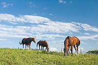 Horses in Landscape