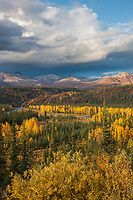 Autumn colors on the tundra and taiga, Nenana river, Denali Highway, Alaska range mountains, interior, Alaska.
