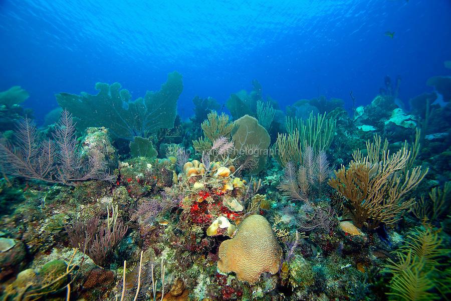 Cuban Coral Reef
