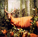 One of the wild animal displays at Hong's Chinese Restaurant and lounge, formerly The Safari Club, in downtown Estacada, Oregon