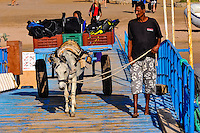 Egypt, Hurghada. Diving and snorkeling trip outisde Hurghada. Mule transporter.