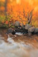 Bishop Creek Gold Pool - Fall Color - Lensbaby