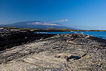 A colony of Marine Iguanas basking in the sun on Fernandina Island in the Galapagos National Park, Galapagos, Ecuador, South America