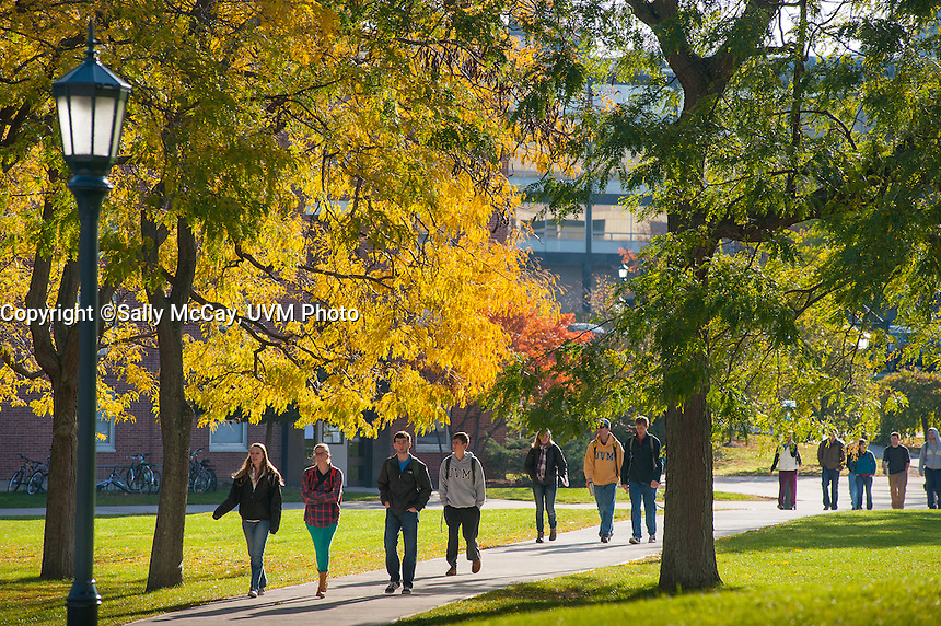 UVM Students Walk Through the Grove of Trees in Front of the Fleming Museum.