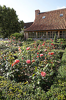A formal parterre has been planted to the rear of the house where roses grow in profusion