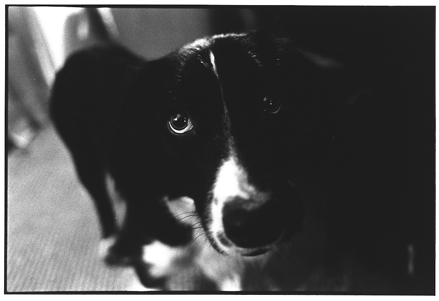 Sprolly gazes wantenly at me begging for a walk in the Somerset countryside.