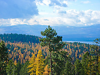 Looking from the Galton range across the Tobacco Valley and Lake Koocanusa to the West Kootenai. Larch aka tamarack showing golden fall colors.