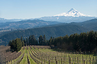 Washington Wine Commission - Columbia Gorge AVA