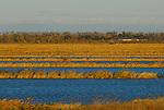 Wetland near Rd. 25 near Woodland
