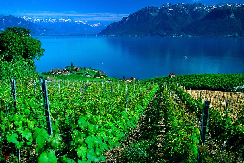 Vineyards along Lake Geneva, Chexbres, Switzerland