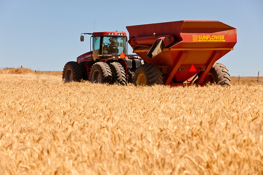 The Case 335 tractor and Sunflower grain trailer sit in an unharvested wheat field.