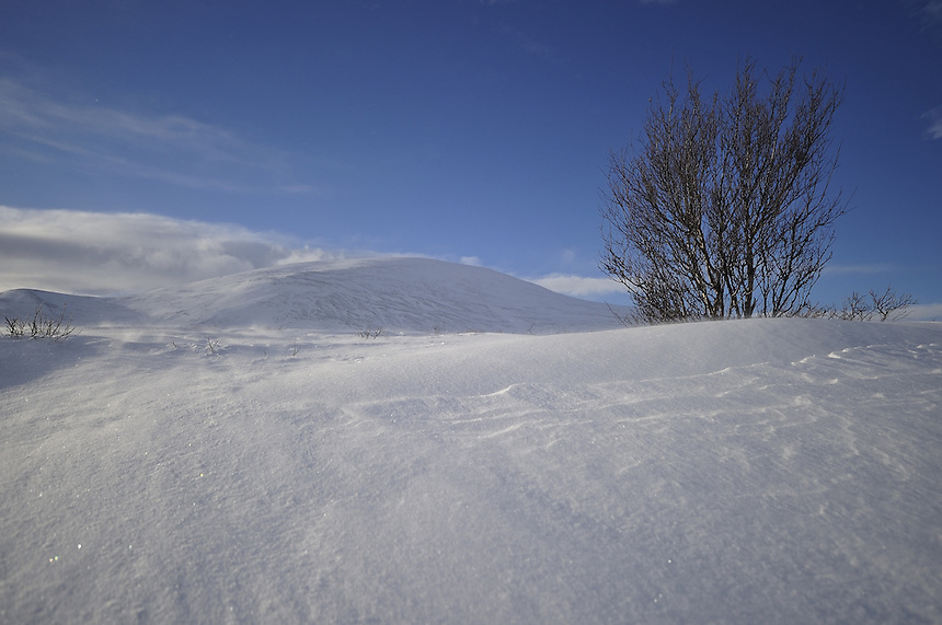 Trees on Dovre mountain.Norway Landscape, landskap,