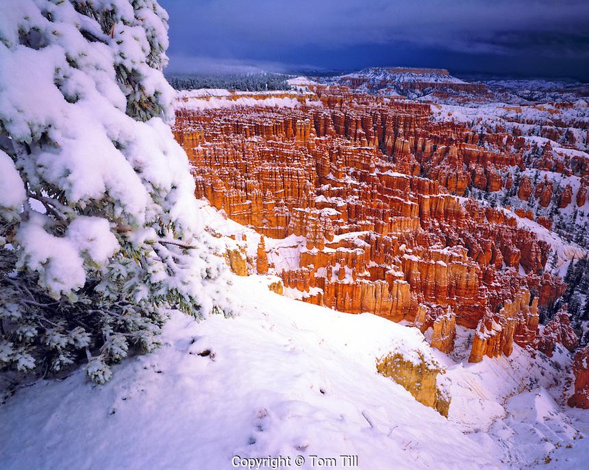 Heavy Morning Snow at Bryce Amphitheater, Bryce Canyon National Park, Utah