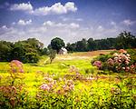 Longwood Gardens -G / L - 3/16
