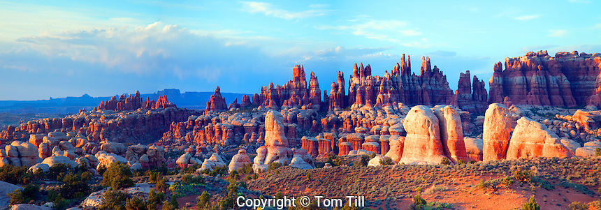 Panorama of Needles spires, Canyonlands National Park, Utah, Needles District, Cedar Mesa sandstone