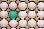 Row after row of white eggs in an egg carton with one green one.