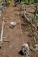 26 January 2011, Berea District. The farm of Thabang Mokone who has been practising conservation Agriculture since 2004.Thabang and his wife, Machomanyane farms at Ha Mamathe. Using conventional farming methods, his maize yield was 60-80kg for the 2.6 acres he cultivated each year. Despite varying weather conditions, Thabang manged to increase his yield to 800kg in 2009/2010. A simple line spacer indicated the maize spacing. The seed is planted with a precise application of fertilizer.