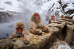 Please call 888-973-0011 or email info@artwolfe.com to purchase a print.<br />