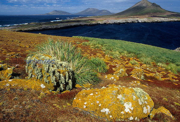 Overview of Steeple Jason Island, Falkland Islands showing lichen-covered rock....