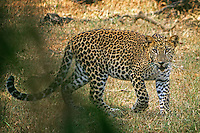 2014_ Sri Lanka_Wildlife