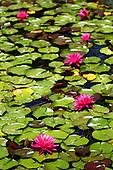 July 07, 2014; Manhattan Beach, CA - Nicole and friends.<br /> <br /> July 16, 2014; Arcadia, CA - LA County Arboretum.<br /> <br /> July 17, 2014; San Marino, CA - Huntington Gardens