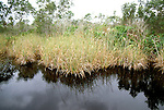 FL: Florida Everglades National Park, sawgrass, Briggs Center, near Marco.Photo Copyright: Lee Foster, lee@fostertravel.com, www.fostertravel.com, (510) 549-2202.Image: flever205