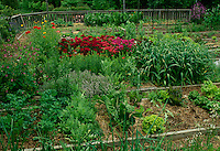 Large home vegetable garden with flowers and mixed herbs and vegetables, midwest USA