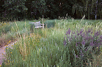 Bench by path in sand hill prairie meadow with Prairie Sandreed (Calamovilfa longifolia), Amorpha canescens (leadplant), Artemesia frigida, and Ratibida at Denver Botanic Garden