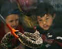 Joseph Castro, 5, right, of Sweetwater, challenges a western diamondback rattlesnake during the 54th annual Rattlesnake Roundup at Nolan County Coliseum in Sweetwater, Texas on Saturday, March 10, 2012. The Sweetwater Rattlesnake Roundup is the world's largest and takes place every second weekend in March.