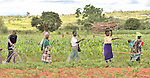 A support group for people living with HIV and AIDS in Ekwendeni, Malawi, walks to a communal garden where they work together. The farm is a project of the Livingstonia Synod of the Church of Central Africa Presbyterian.