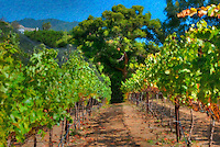 Wine, Vineyard, Malibu, California, CA, Landscape, Trees, Grapes, Los Angeles California, Growing Grapes High dynamic range imaging (HDRI or HDR)
