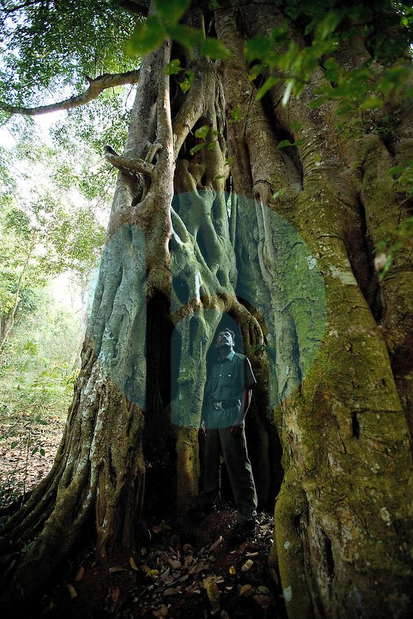 20080131_Periyar, India_ A massive Banyan Tree, in the Periyar Wildlife Sancuary in the Southern Indian state of Kerala.  Photographer: Daniel J. Groshong/Tayo Photo Group
