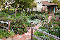 Picket fence and brick path entering front yard California native plant drought tolerant garden, Santa Barbara, spring design by carol bornstein