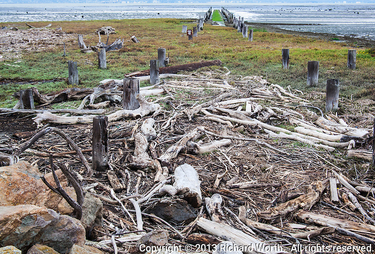 On the shores of San Francisco Bay, next to a waste water treatment plant, a tangle of driftwood lies on shore near abandoned pilings, now part of a resource protection area.  Natural chaos amid manmade order.  Neither side wins.