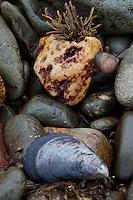 Tidal Still Life, Castine, Maine, US