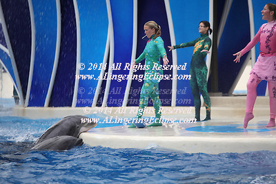 Dawn Brancheau, a trainer and performer shown with a pair of dolphins on the far left at SeaWorld Orlando FL in 2009 at Shamu Stadium.  Dawn Brancheau was killed during a live show on February 24, 2010 by a killer whale Tilikum, at Shamu Stadium.
