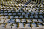 Grass growing through paving stones, HamburgGermany